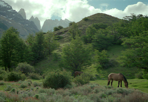 Horses below Torres del Paine